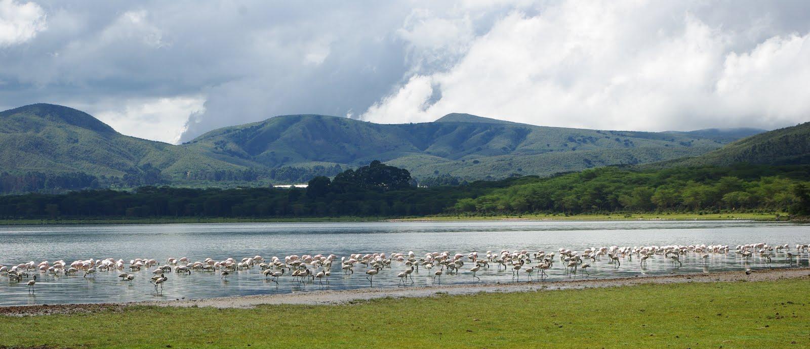 Lake Naivasha, image source; Imarisha Naivasha