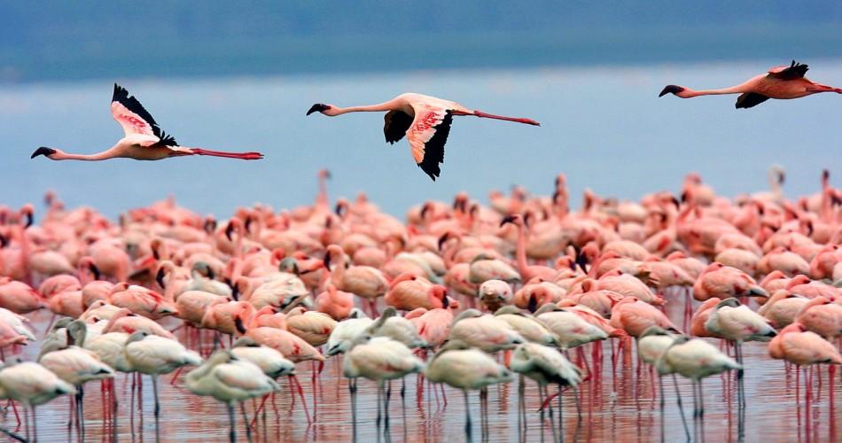 image by seasoned wildlife photographer Martin Harvey