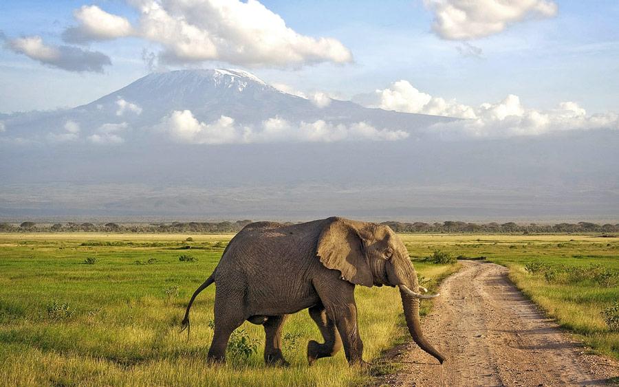An Elephant and Mt Kilimanjaro Background at Amboseli