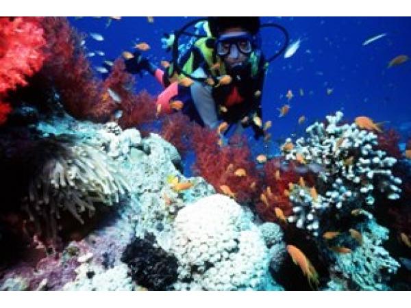 Diving at Malindi Marine Park' source: safarilodges.com