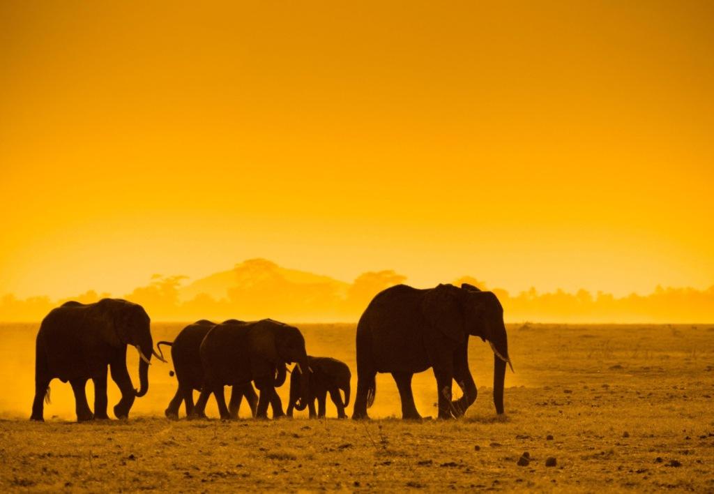 elephants21028